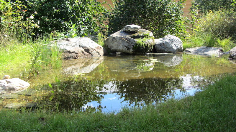 Un étang à St-Sulpice